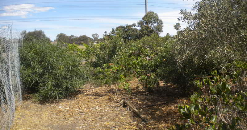 fruit tree panorama-2014-lores