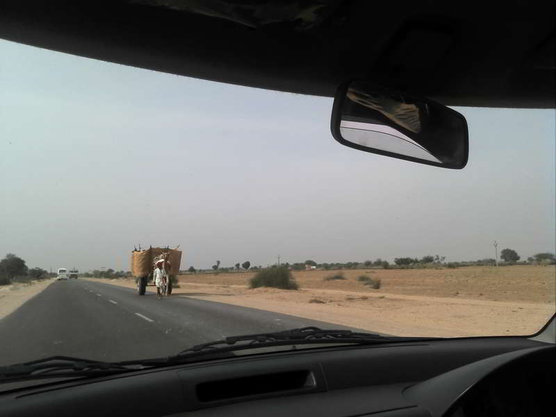 camel-on-road